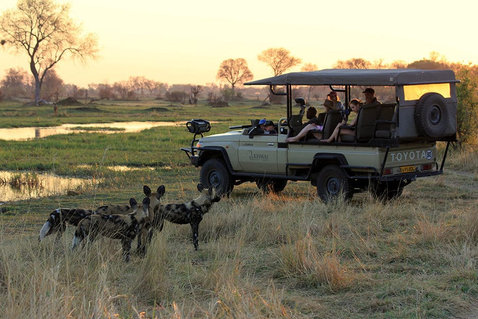 African Wild Dogs at sunset - image by Heléne Ramackers