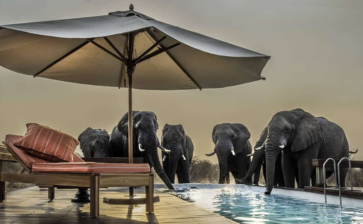 Elephants drinking from the pool.