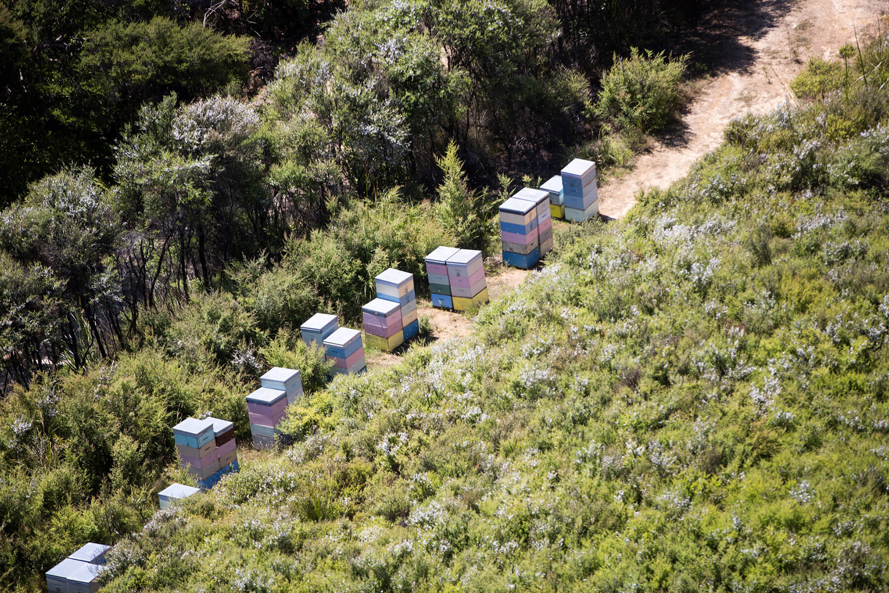 Mānuka Doctor: Luxury Honey from New Zealand for Your Home