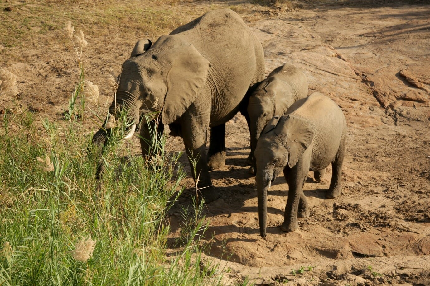 Elephants often make their appearance close to the Sabie River. Photo by Heléne Ramackers