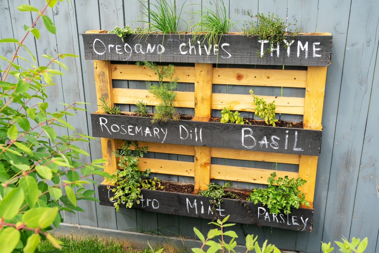 growing your own garden at home